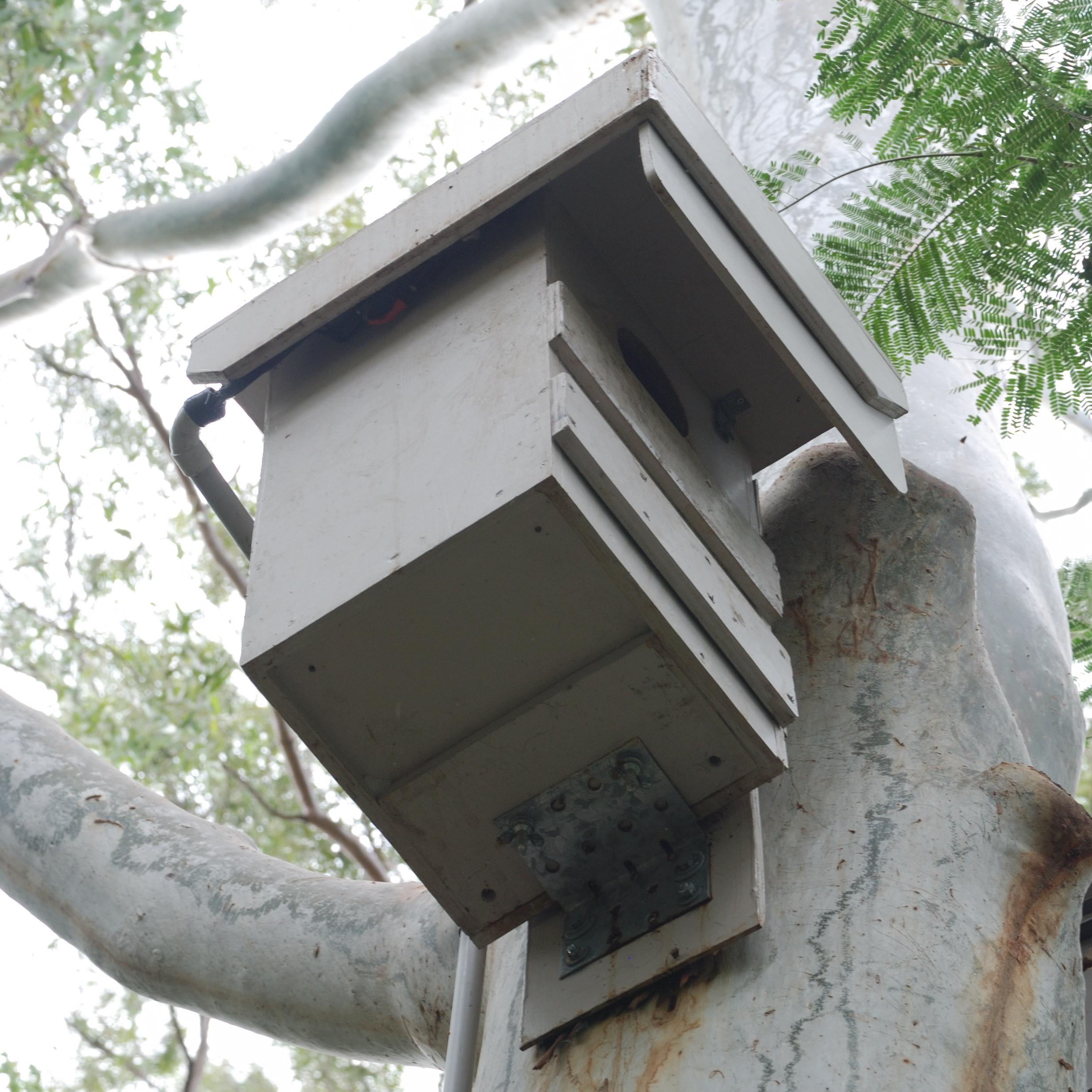 Possum Box Plans Possum Tv Live Box Specifications